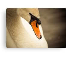 Swan Neck Canvas Print