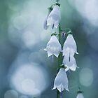 sliver bells by Nika Seliverstova