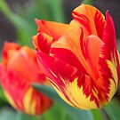 Spring Greetings  by vbk70