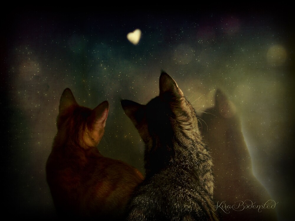 Bella Notte by © Kira Bodensted