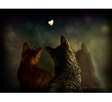 Bella Notte Photographic Print