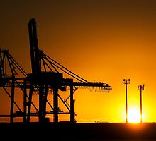 Monster Cranes at Sunrise by Tony Steinberg