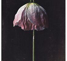 The Dying Light (c)2014 JSBirnie by JSBirnie