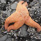 Ochre Starfish by Joe Powell