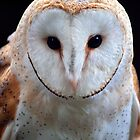 Barn Owl by Krys Bailey