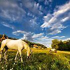 Grazing horses by Valerii Baryspolets