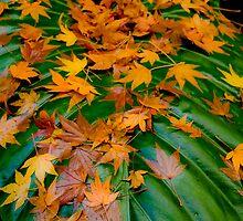 Leaf on Leaf by Michael Eyssens