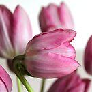 Spring Greetings IV by vbk70