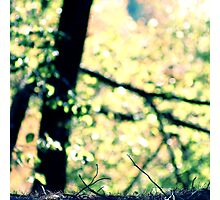 A Forest Floor Photographic Print