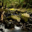 Under the bridge before Liffey Falls by nealbrey