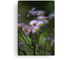 Spring Soft Canvas Print