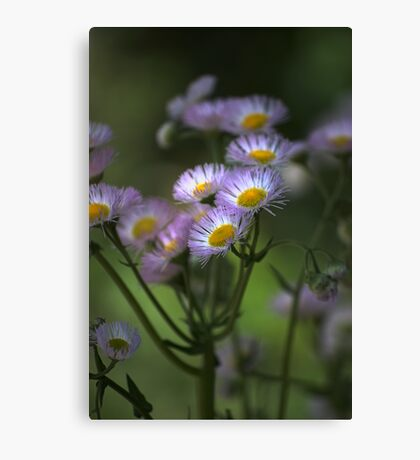Spring Soft Canvas Print