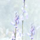 Bluebells Monet Style by Catherine Hamilton-Veal  ©