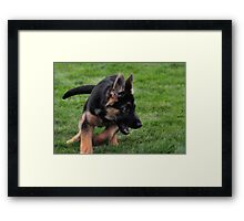 freddie on the move Framed Print