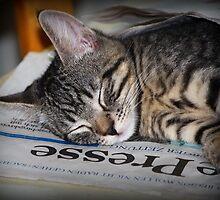 Latest News: Tabby Fell Asleep on Newspaper by karina5