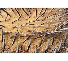 Cycas Spikes  Photographic Print