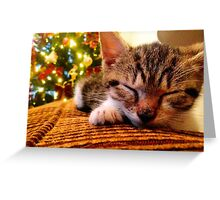 Kitten Christmas  Greeting Card
