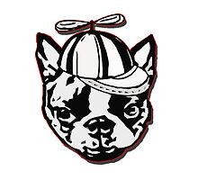 { boston terrier - buddha series: with twirly cap silly dog } by smooshfaceutd
