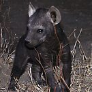 Hyaena Cub in Den - Kruger National Park by Bev Pascoe