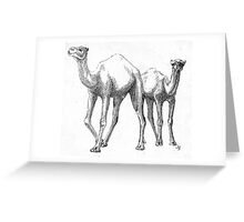 Couple of Camels Greeting Card