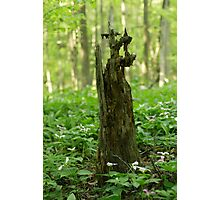 Forest decay Photographic Print