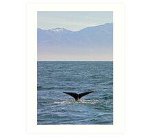 sperm whale, Kaikoura Peninsula , New Zealand   Art Print