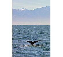 sperm whale, Kaikoura Peninsula , New Zealand   Photographic Print