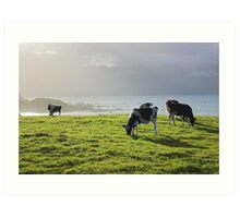 cow glow, New Zealand  Art Print