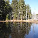 Pond by Tracy Wazny