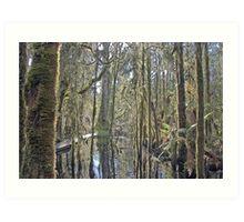 Ship Creek , West Coast , New Zealand  Art Print