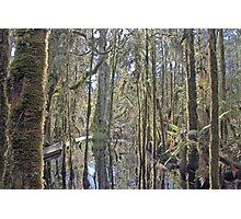 Ship Creek , West Coast , New Zealand  Photographic Print