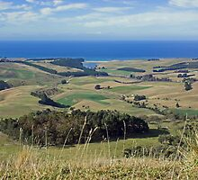 Puketapu Hill sea view, Palmerston , New Zealand by Christopher Barton