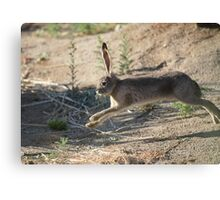 Jack the Rabbit Canvas Print