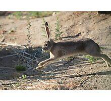 Jack the Rabbit Photographic Print