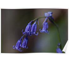 Blue Bells Poster