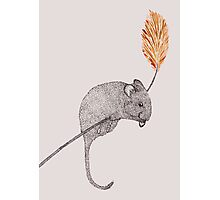 field mouse Photographic Print