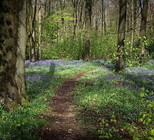 Woodland Walk in Springtime by Heidi Stewart