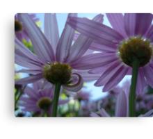 Purple Daisy Petals Canvas Print