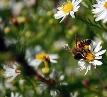 Flowers and Bee Macro by tamckee