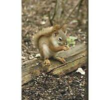Squirrel's Morning Snack 2 Photographic Print