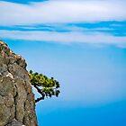 Growing pine by Valerii Baryspolets