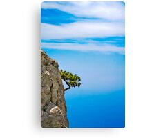 Growing pine Canvas Print