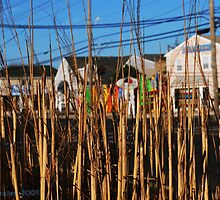 LBI, Beach Grass by Joe Metzler