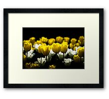 Tulips Yellow And White Framed Print