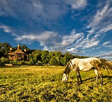 Horse grazing on the meadow by Valerii Baryspolets