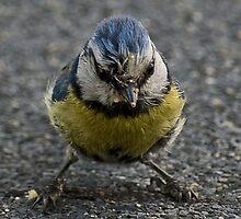 """Very bad bird"" by MarekM"
