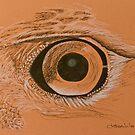 Hawk by Deborah Lee Soltesz