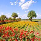 Texas Wildflower Farm  by Bonnie T.  Barry