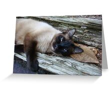 SUSHI IN THE CATS' CRADLE Greeting Card