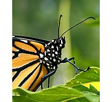Monarch Butterfly Head Macro Photographic Print
